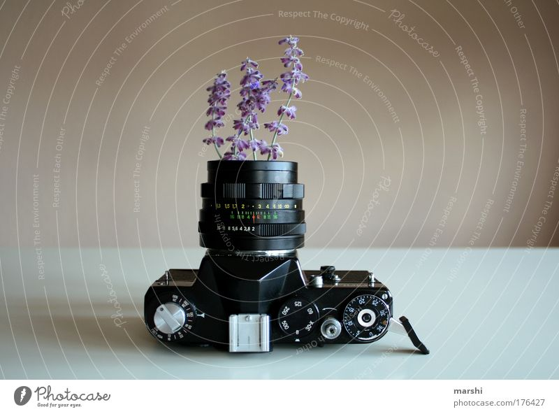 Nature Beautiful Old Plant Summer Joy Spring Photography Perspective Growth Leisure and hobbies Violet Kitsch Camera Profession Exceptional