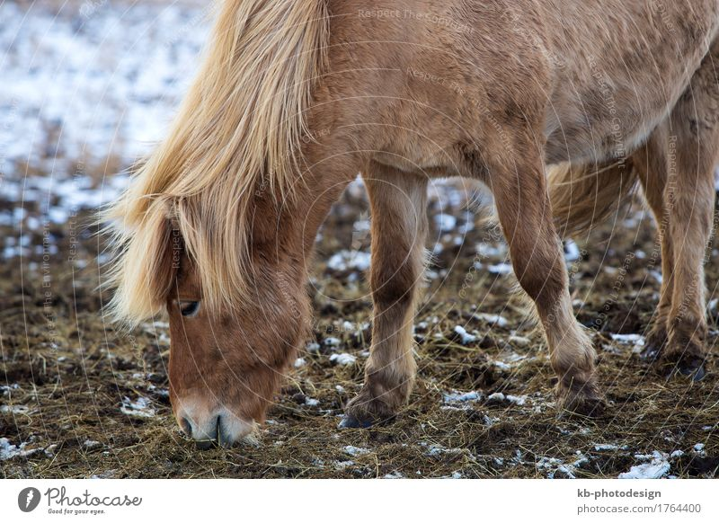 Vacation & Travel Animal Far-off places Winter Tourism Adventure Horse Iceland