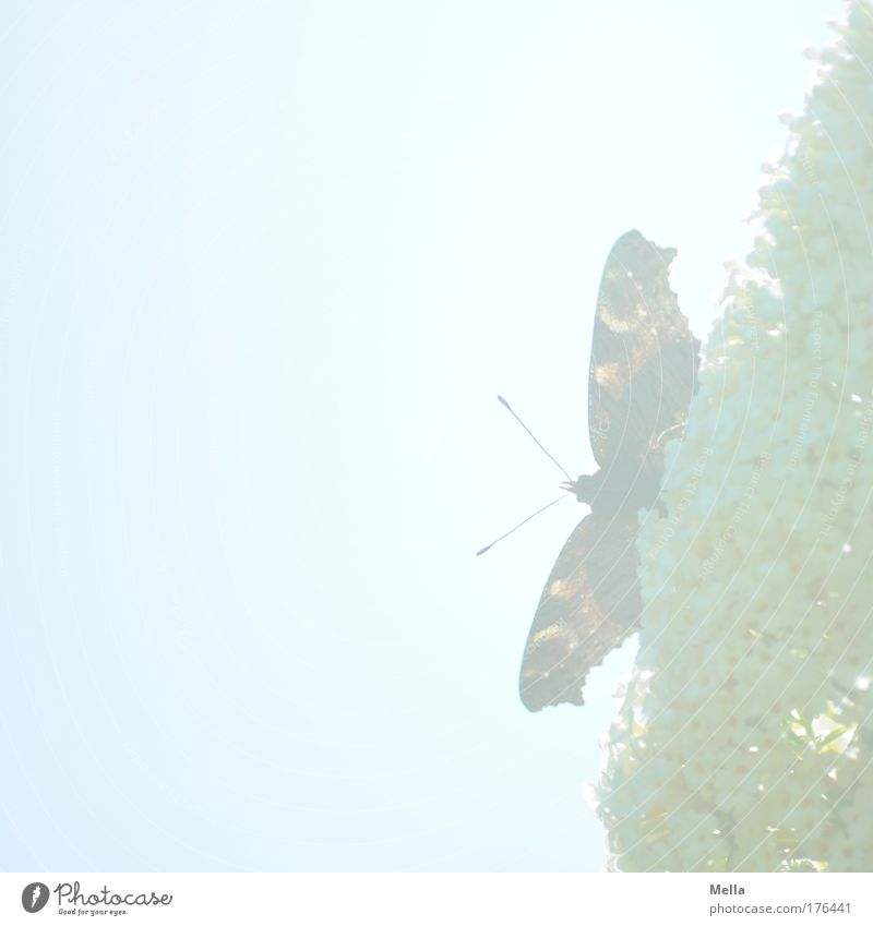 Madame Butterfly Nature Plant Animal Sky Sunlight Spring Summer Beautiful weather Bushes Blossom Buddleja Park Wild animal Wing Peacock butterfly Feeler 1