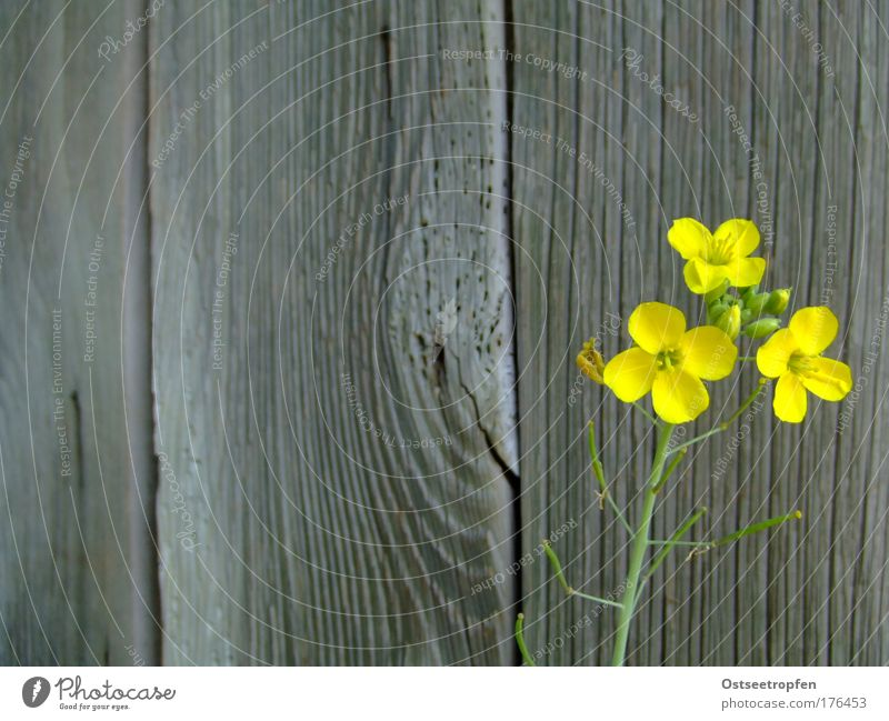 Old Green Plant Summer Yellow Wall (building) Blossom Wood Gray Wall (barrier) Contentment Hope Esthetic Simple Natural Blossoming