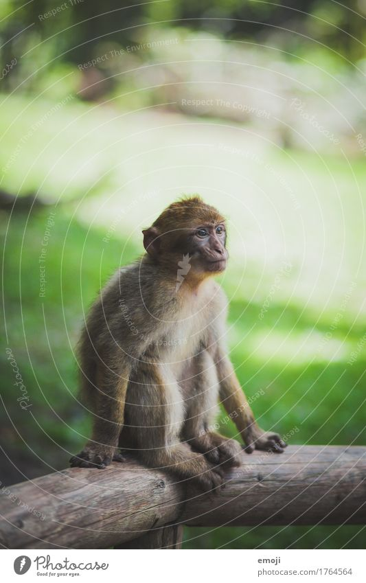little monkey Animal Zoo Monkeys 1 Baby animal Cuddly Green Colour photo Exterior shot Deserted Day Shallow depth of field
