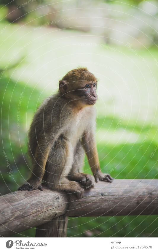Green Animal Baby animal Wild animal Curiosity Pelt Zoo Monkeys
