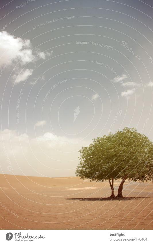 tüdeldingens Colour photo Copy Space top Environment Nature Landscape Plant Animal Elements Earth Sand Fire Sky Sun Drought Desert Oasis Happy Adventure tüdeldü