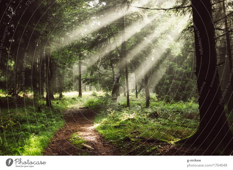 sunrays Environment Nature Sun Sunlight Summer Fog Forest Beautiful Warmth Adventure Discover Relaxation Freedom Vacation & Travel Far-off places Target