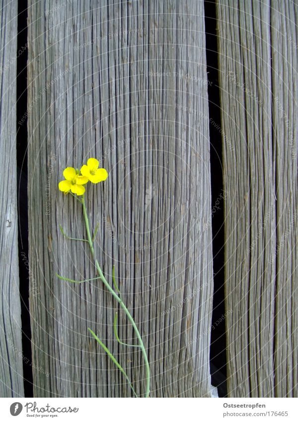 Nature Green Plant Summer Flower Loneliness Yellow Wall (building) Wood Gray Blossom Wall (barrier) 2 Natural Fresh Growth