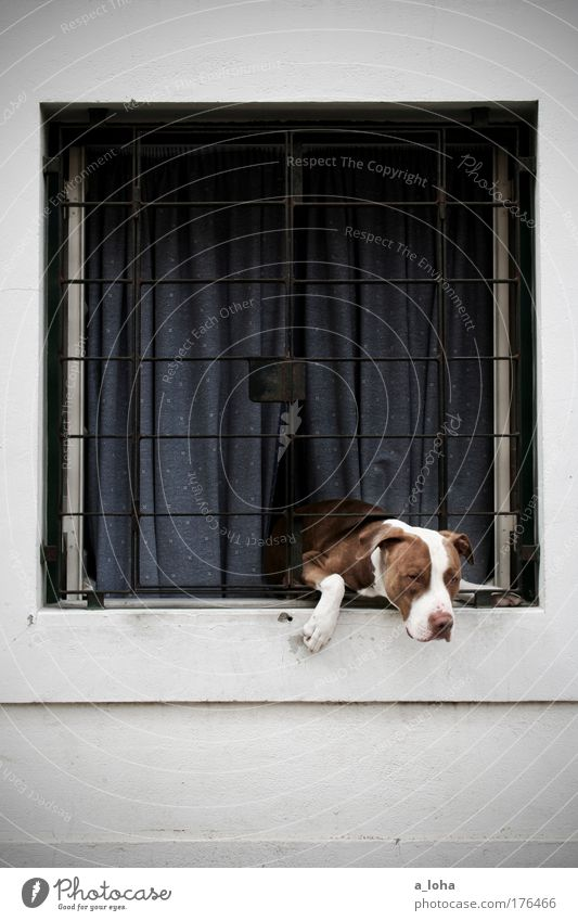 Dog Animal Loneliness House (Residential Structure) Window Wall (building) Wall (barrier) Stone Metal Line Facade Safety Observe Curiosity Protection
