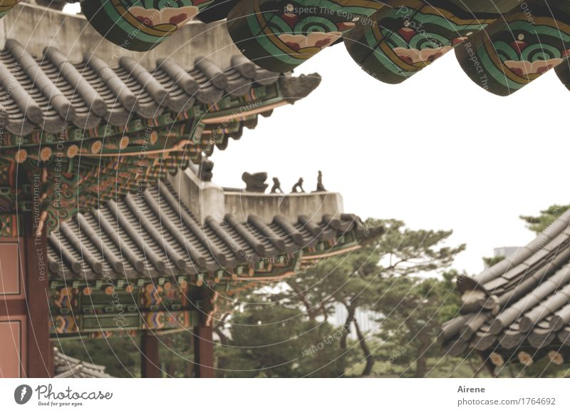 Warmth Wood Brown Gloomy Climate Historic Roof Asia Tourist Attraction Exotic Figure Bizarre Respect Dreary Painted Palace