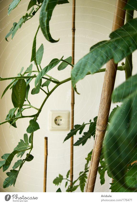 Nature Plant Leaf Garden Flat (apartment) Food Environment Climate Culture Vegetable Tomato Pot plant Energy crisis