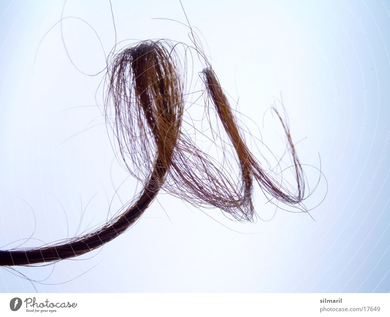 Lure II Curl Women´s hair Spiral Bright background Isolated Image Object photography Hairdressing Tip of the hair Split hairs Curly Tattered Beautiful
