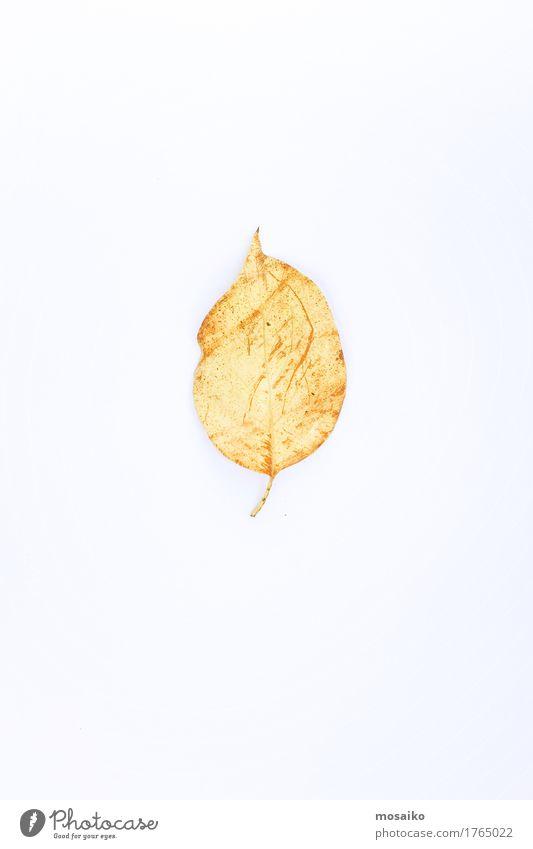 herbarium Design Education Science & Research Environment Nature Plant Autumn Leaf Authentic Exceptional Bright Historic Uniqueness Natural Original Positive