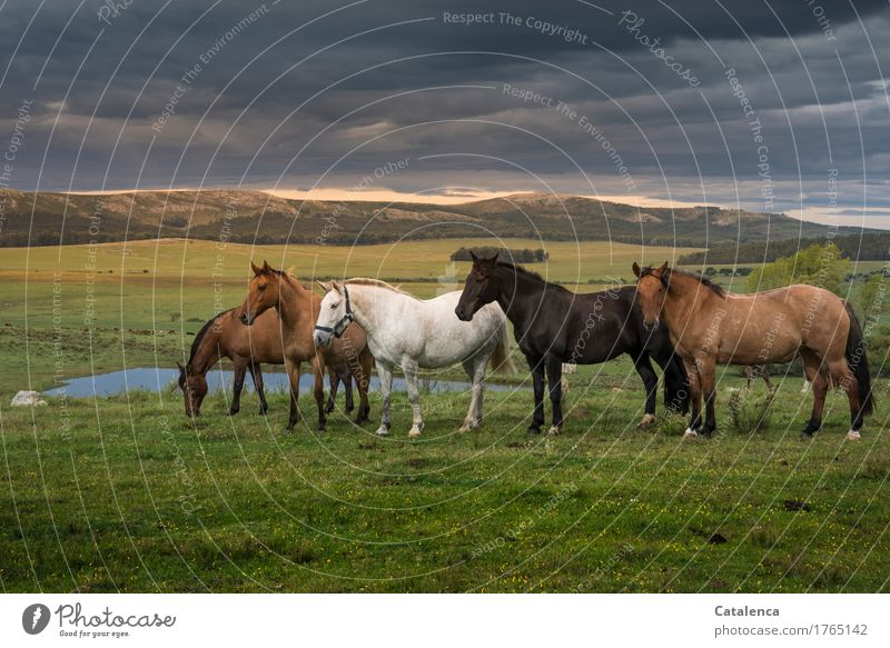 Charity or herd instinct. Ride Summer Family & Relations Nature Landscape Plant Animal Sky Storm clouds Sunrise Sunset Tree Grass Steppe Pet Horse Herd Observe