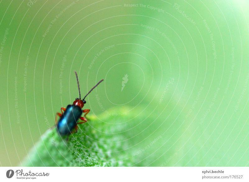 Nature Green Plant Leaf Black Animal Small Environment Sit Observe Wild animal Beetle Feeler Crawl Brownish