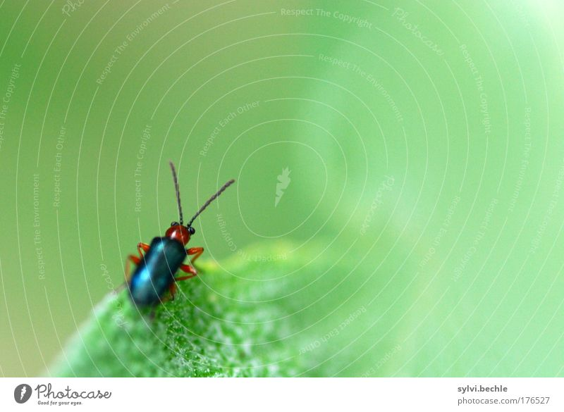The wide, wide world ... Environment Nature Plant Animal Wild animal Beetle Observe Sit Small Green Feeler Colour photo Multicoloured Exterior shot Close-up