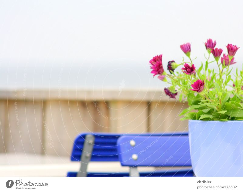 Vacation & Travel Plant Blue Green Flower Tourism Nutrition Happiness Communicate Wait Table To enjoy Trip Joie de vivre (Vitality) Chair Violet