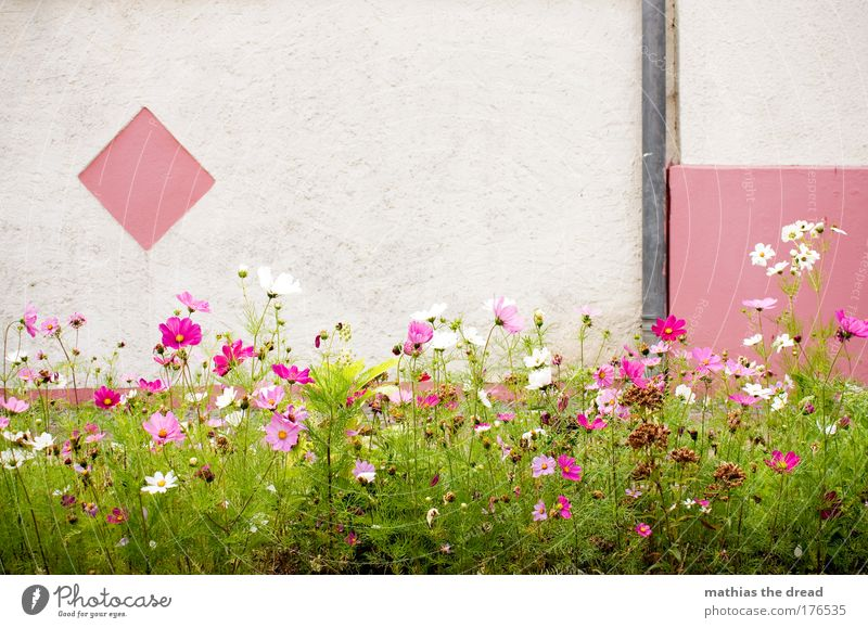 Nature Beautiful White Plant Summer Colour Meadow Wall (building) Blossom Grass Spring Garden Wall (barrier) Park Contentment Small