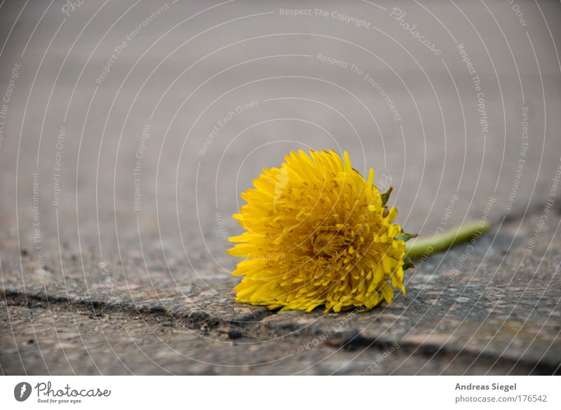 Nature Green Plant Flower Loneliness Yellow Street Environment Gray Blossom Lanes & trails Stone Sadness Spring Line Earth