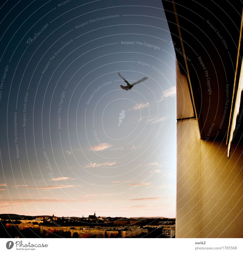 Sky Summer Clouds Animal House (Residential Structure) Wall (building) Life Movement Wall (barrier) Germany Flying Wild Horizon Free Climate