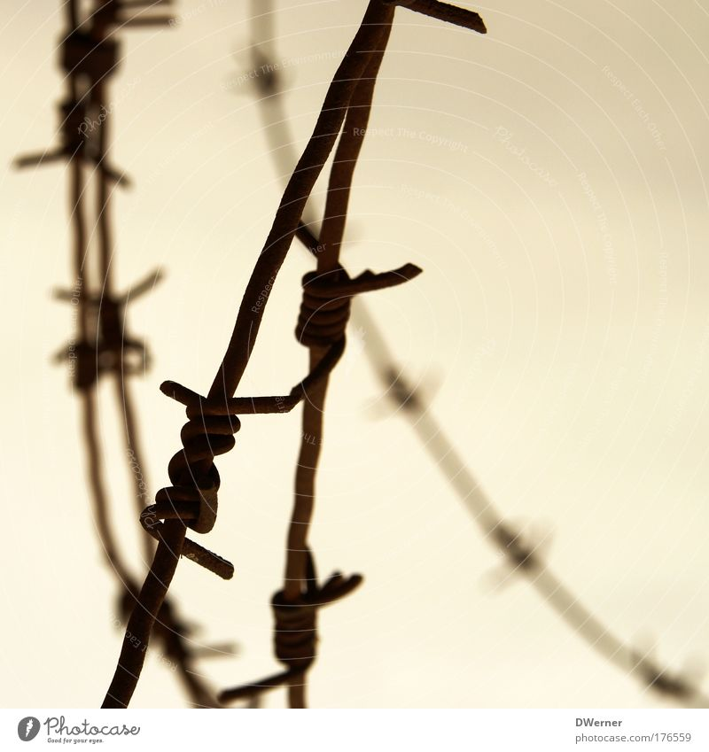Barbed Wire II Environment Sky Clouds Metal Aggression Thorny Bravery Safety Protection Fear Dangerous Apocalyptic sentiment Freedom Testing & Control