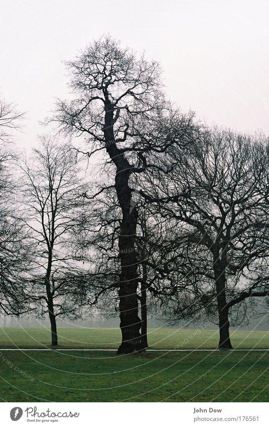 Nature Tree Cold Dark Autumn Grass Landscape Sadness Rain Fog Grief Gloomy Romance Threat Bushes To go for a walk
