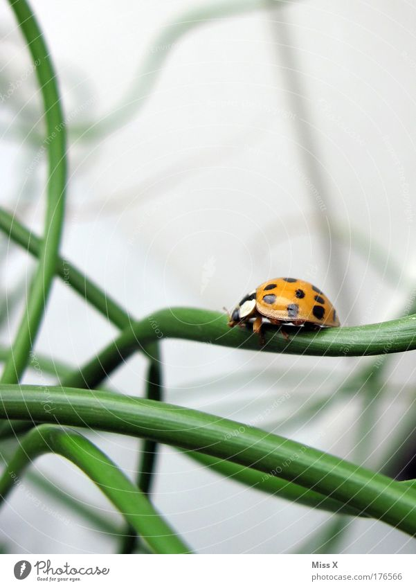 Nature Beautiful Plant Animal Meadow Grass Happy Bushes Climbing Point Ladybird Beetle Crawl Spotted Good luck charm