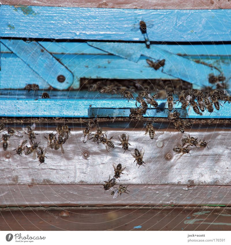 bee infatuation Environment Bee Flock wood Movement Free Together Small Near natural Retro Blue Moody Protection Diligent Life Attachment Bee-keeping