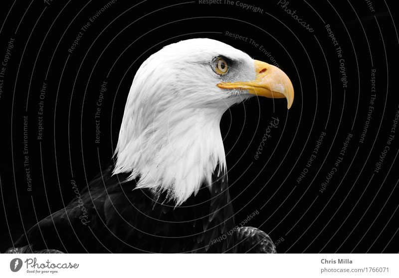 Weiskopf's Sea Eagle Vacation & Travel Trip Adventure Freedom Nature Animal Wild animal Bird 1 Observe Think Discover Relaxation Crouch Listening Hunting Wait