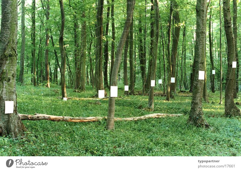 Tree Green Leaf Forest Spring Paper Symbols and metaphors Piece of paper Idea