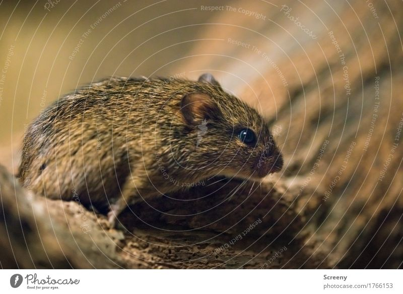 Nature Animal Small Wild animal Watchfulness Mouse