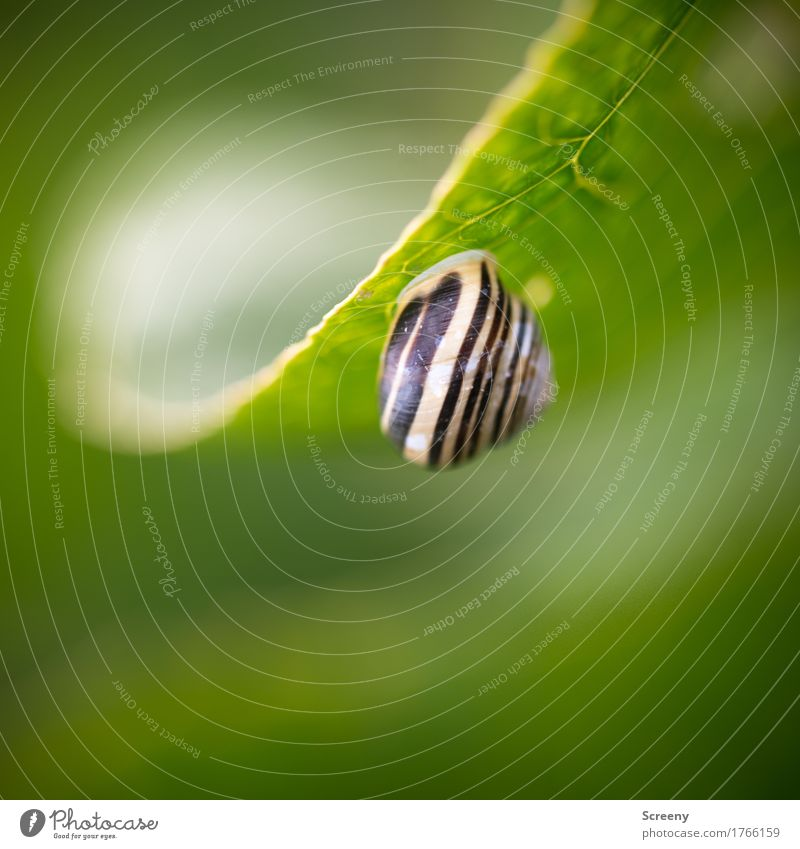 House upside down... Nature Plant Animal Leaf Meadow Field Forest Snail Snail shell 1 Hang Small Green Hide Hidden Colour photo Exterior shot Close-up