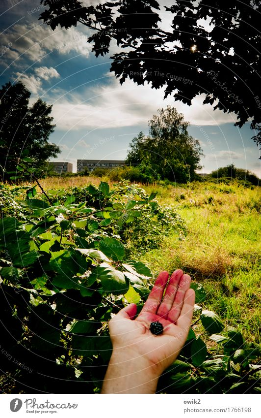 organic Masculine Hand Fingers Environment Nature Landscape Plant Sky Clouds Horizon Summer Climate Beautiful weather Tree Grass Bushes Leaf Wild plant Hedge