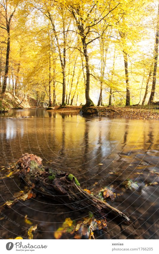Nature Landscape Relaxation Calm Forest Yellow Autumn Wood Brown Hiking River Tree trunk Autumn leaves Brook National Park Mill