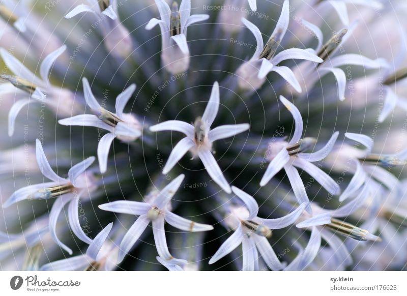 Blue Beautiful Plant Flower Joy Meadow Emotions Spring Blossom Park Arrangement Growth Decoration Uniqueness Many Violet