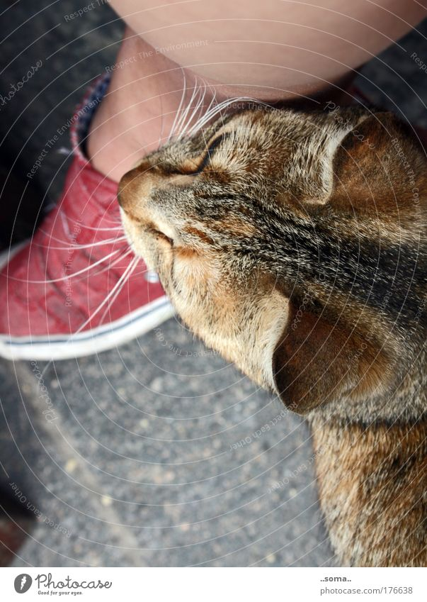 Calm Animal Life Emotions Feet Cat Legs Near Soft Peace Natural Pelt Touch Serene To enjoy Cuddly