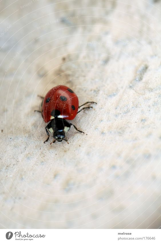 Nature Red Joy Life Happy Dream Small Flying Free Hope Joie de vivre (Vitality) Touch Beautiful weather Beetle Crawl