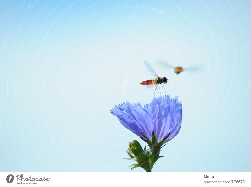 Nature Flower Blue Plant Summer Animal Meadow Blossom Movement Friendship Moody Together Field Fly Environment Flying