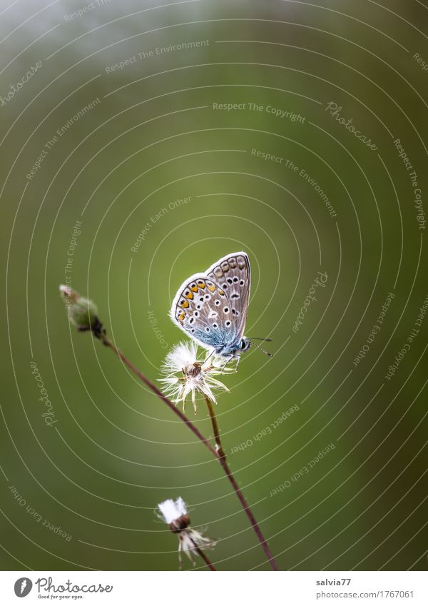 Nature Plant Blue Summer Green Relaxation Animal Calm Blossom Natural Small Gray Above Free Idyll Uniqueness