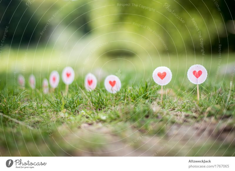 Border of Love Sign Heart Green Pink Red Sign forest Lawn Grass Signs and labeling Colour photo Exterior shot Detail Deserted Day Deep depth of field