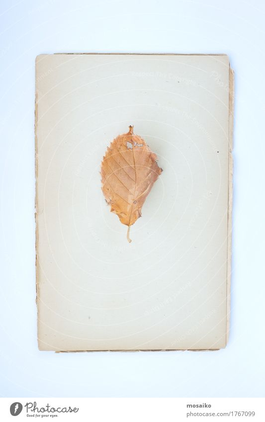 herbarium Elegant Style Design Education Science & Research School Study Gardening Agriculture Forestry Art Book Nature Landscape Plant Autumn Tree Leaf