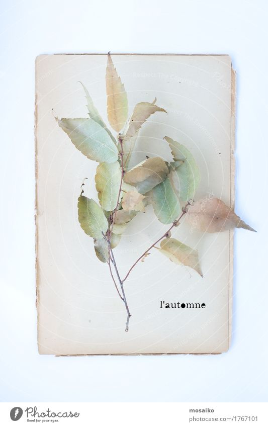herbarium Lifestyle Elegant Style Design Feasts & Celebrations Thanksgiving Environment Nature Plant Leaf Paper Senior citizen Esthetic Autumn Autumnal Poetic