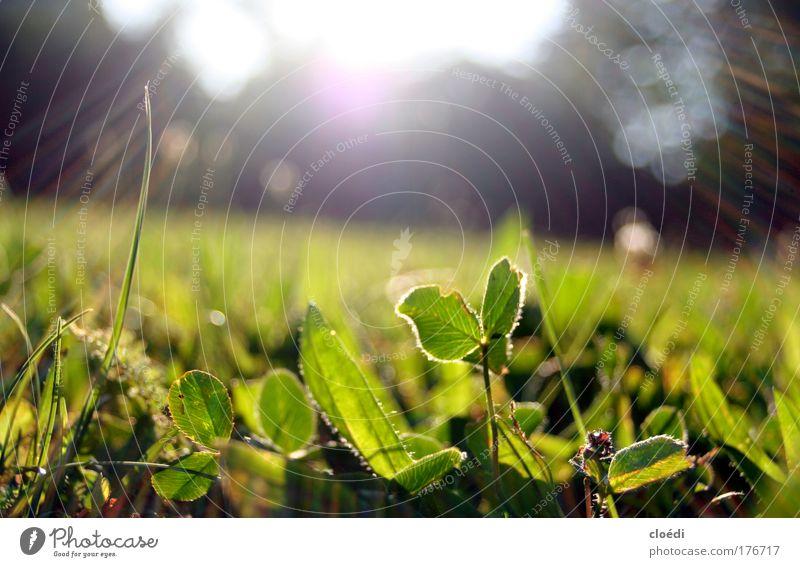 Green Plant Summer Meadow Grass Sunbeam Sunrise