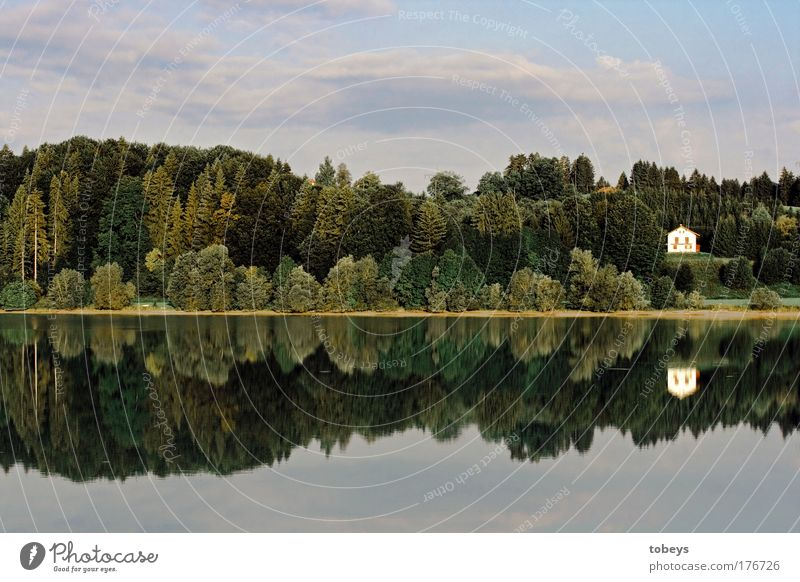 Nature Summer Relaxation Loneliness Landscape Calm Forest Happy Freedom Lake Flat (apartment) Contentment Idyll Island Lakeside River