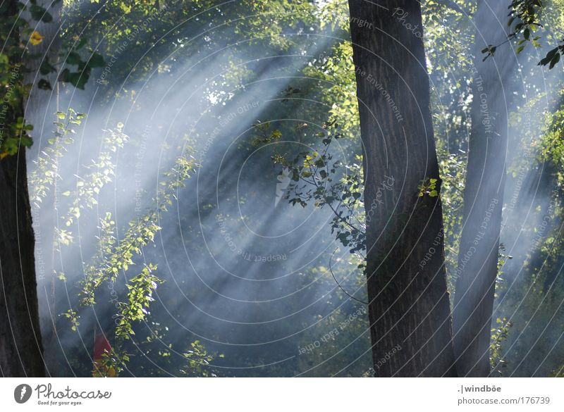 forest mist Colour photo Exterior shot Deserted Morning Dawn Light Light (Natural Phenomenon) Sunlight Sunbeam Central perspective Long shot Forward Nature Air