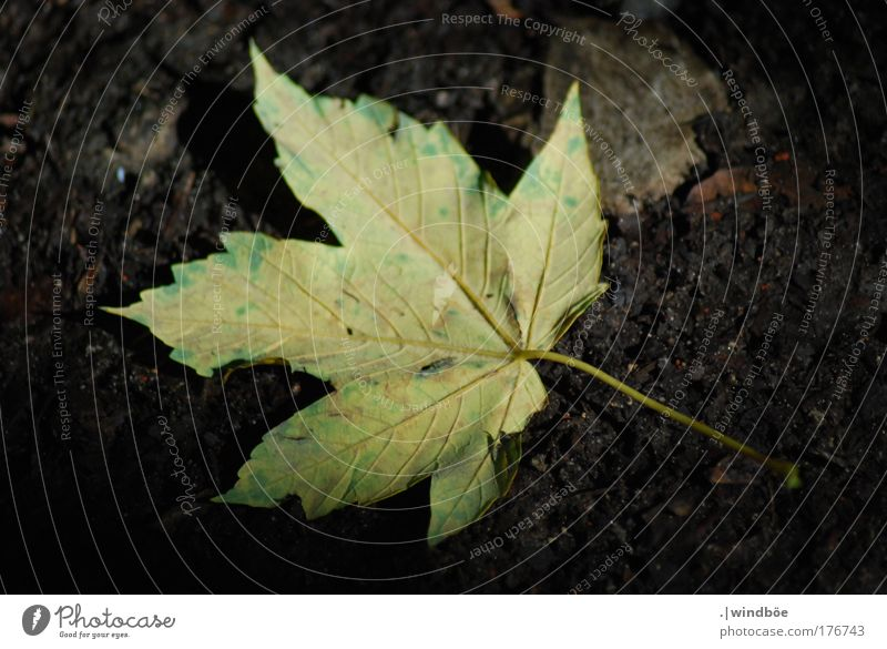 Nature Old Green Tree Plant Sun Summer Leaf Black Yellow Dark Autumn Brown Gold Lie Exceptional