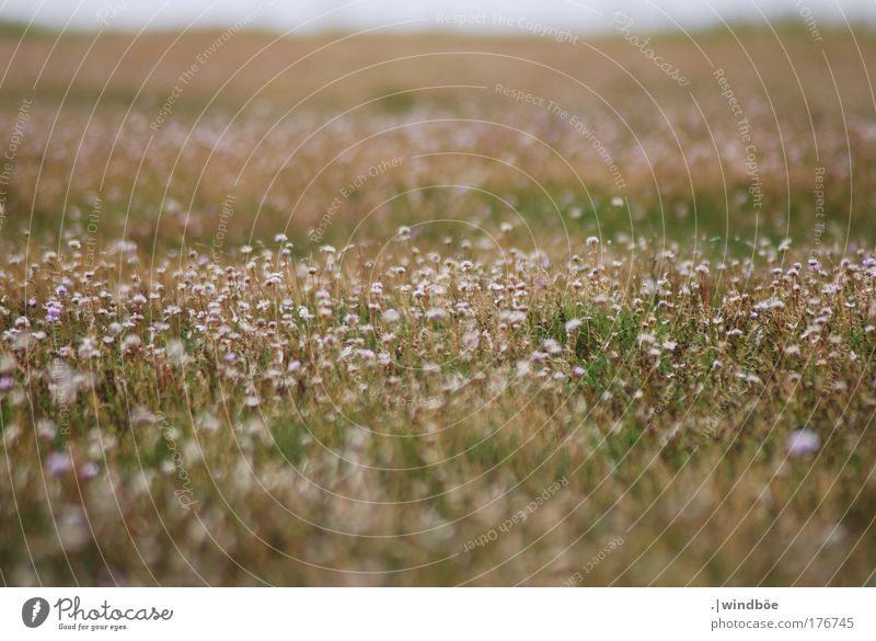 wildflower meadow Colour photo Exterior shot Close-up Deserted Day Sunlight Blur Central perspective Long shot Forward Environment Nature Landscape Earth Spring