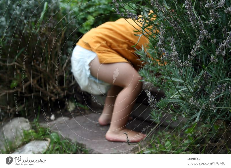 Fragrant hiding place Colour photo Exterior shot Day Children's game Baby Toddler Infancy Skin Bottom Legs Feet 1 Human being 1 - 3 years Summer Plant Grass