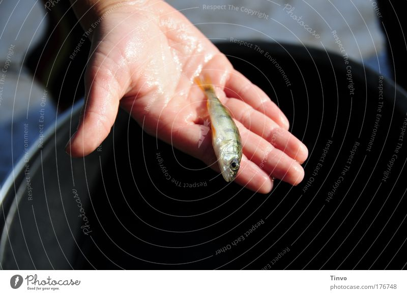 Hand Animal Death Wait Small Wet Fingers Fish Delicate Catch To hold on Pain Captured Fishing (Angle) Indicate Exhaustion