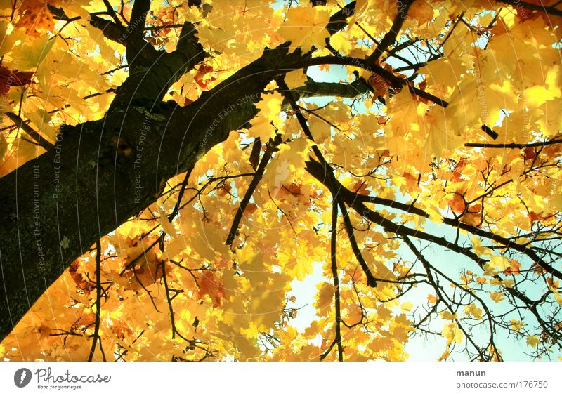 Nature Beautiful Tree Sun Calm Leaf Yellow Forest Relaxation Autumn Park Bright Design Gold Change Transience