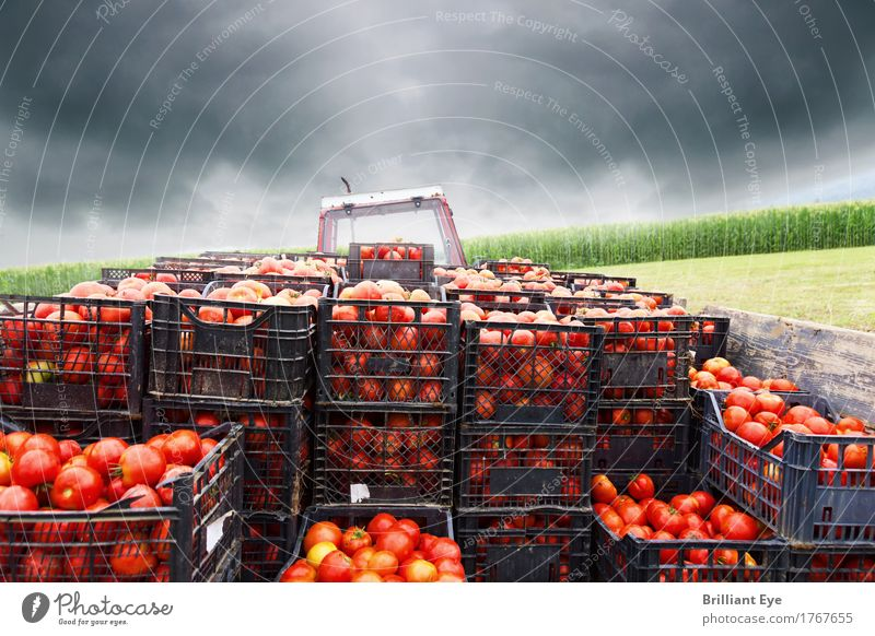 Let's go Food Vegetable Tomato Nutrition Work and employment Agriculture Forestry Logistics Tractor Field Movement Juicy Red Beginning Stress Target Farmer