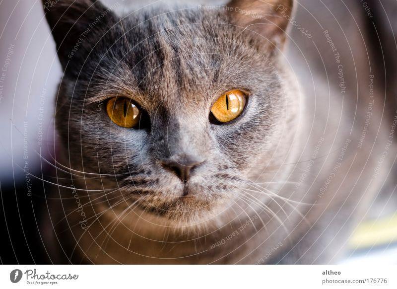Animal Cat Pet Stationery