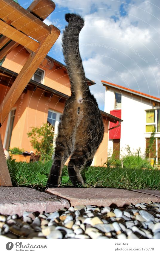 Cat Walking Bottom Pelt Pet Snapshot Photographer Tails Pursue Scandal Paparazzo Caught by a speed camera Stalking Harass